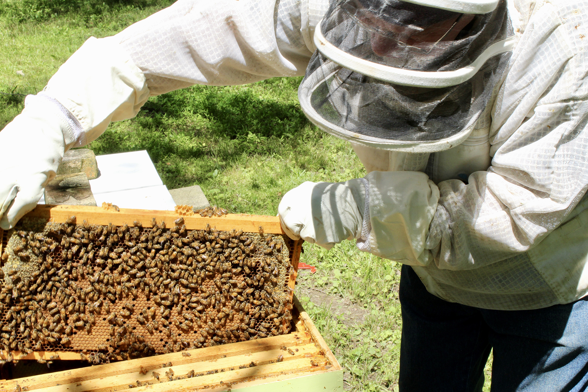This is a photo of beekeeper John Suko checking on a honey frame.